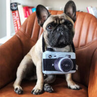 New Pet Products 2020 Pet Plush Toy Dog Camera Photo Props For Pet Pet Toys: Pet Toys Products, Dog Goods New Pet Products 2020 Pet Plush Toy Dog Camera Photo Props For Pet